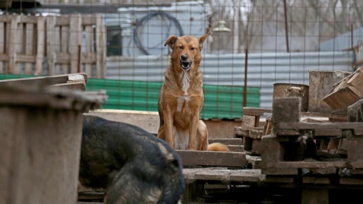 В Уфе появится государственный приют для бездомных животных