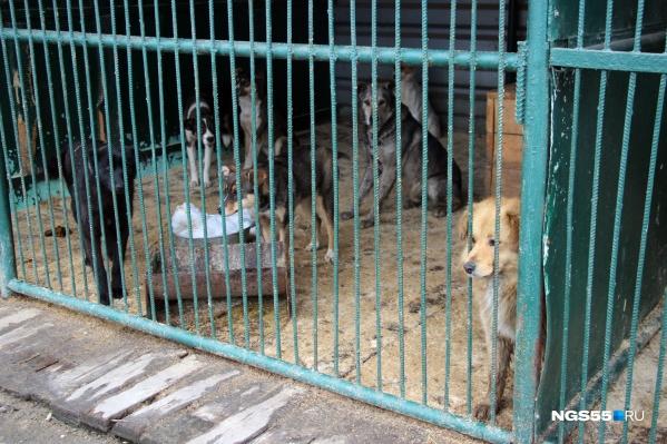 В этом году ловить бродячих животных в Омске должны более активно, чем раньше. Дальнейшая их судьба не совсем ясна