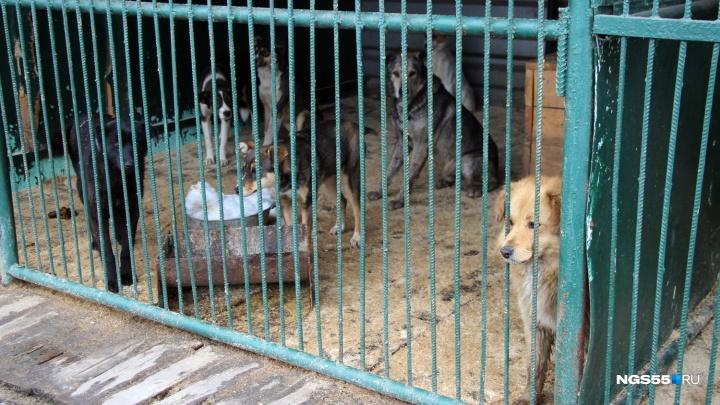 САХ получил новый план на отлов бродячих собак — пять тысяч за год