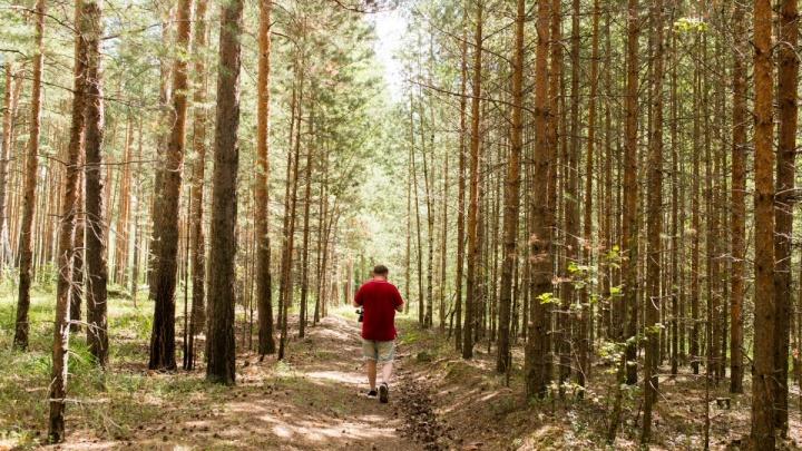 В Ярославской области хотят ввести новый закон о защите деревьев