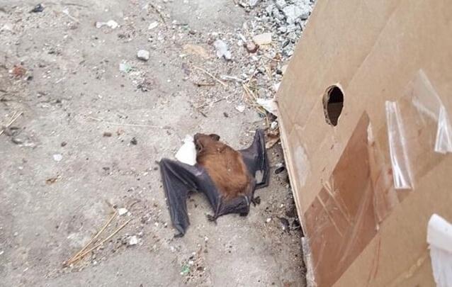 «Их крики слышала вся округа»: волгоградцы выбросили на мусорку три пакета с летучими мышами