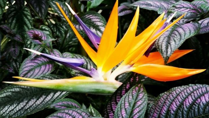 В Ботаническом саду УрО РАН зацвело 55-летнее растение-предсказатель погоды