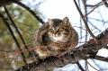 Мартовские коты. 12 мягких кадров с нижегородскими пушистиками, которые уверены, что весна наступила