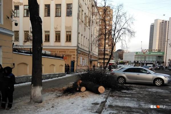 Одно из спиленных деревьев около торгового центра «Европа»