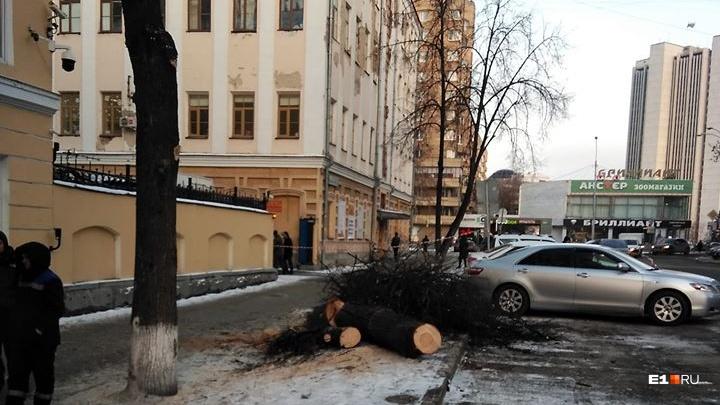 В мэрии опровергли заявление «Парков и скверов» о готовящейся в городе массовой вырубке деревьев
