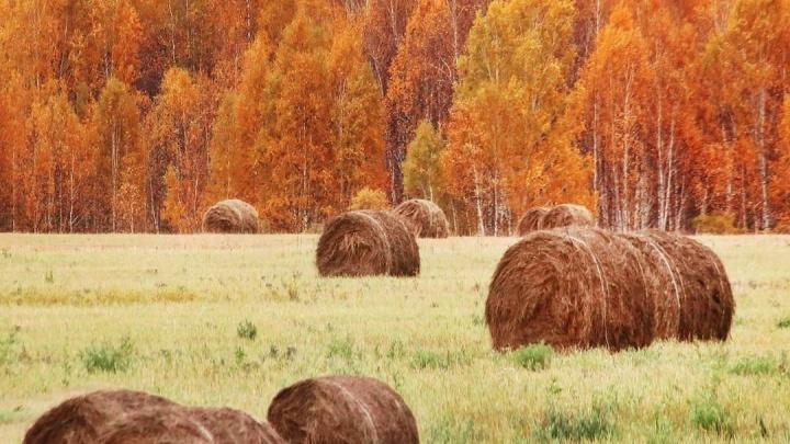 Осень в Красноярске глазами фотографов: 10 лучших снимков