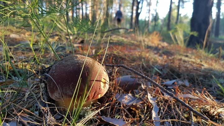 Зауральские спасатели нашли в лесу под Утяком потерявшуюся девушку
