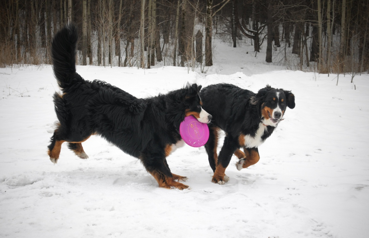 Тоже Бетти, она играет со своим другом