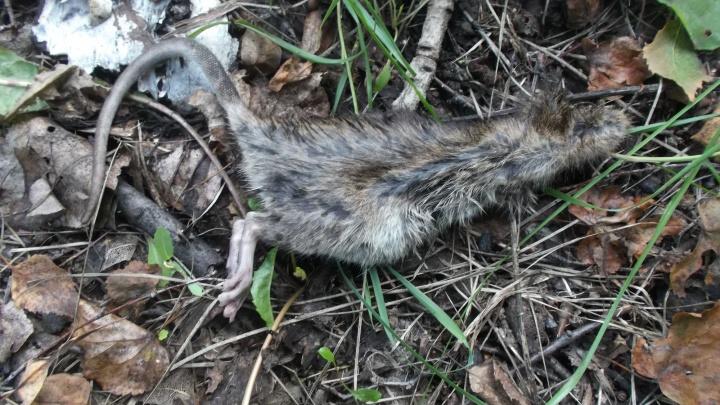 Новосибирцы натыкаются на останки животных в парке «Городское начало»