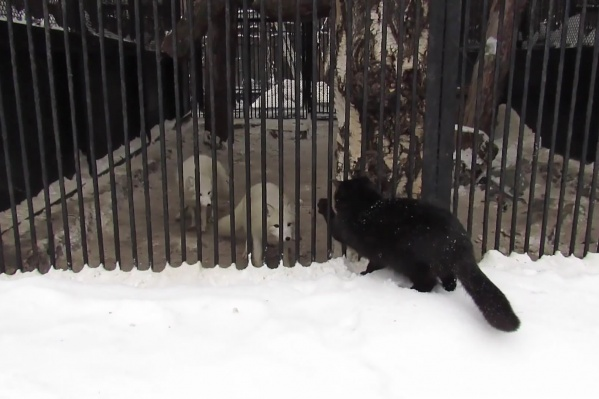 Видео с кошкой Нина Курбаткина сняла накануне, 20 января