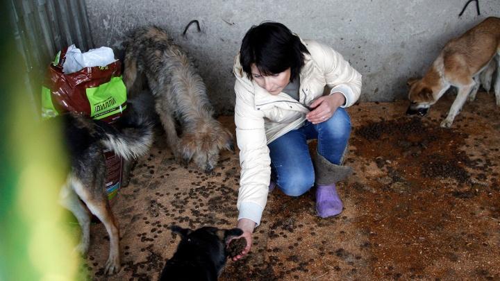 Директор собачьего концлагеря: «Омск делится на сочувствующих и агрессивных, кто хуже тех собак»