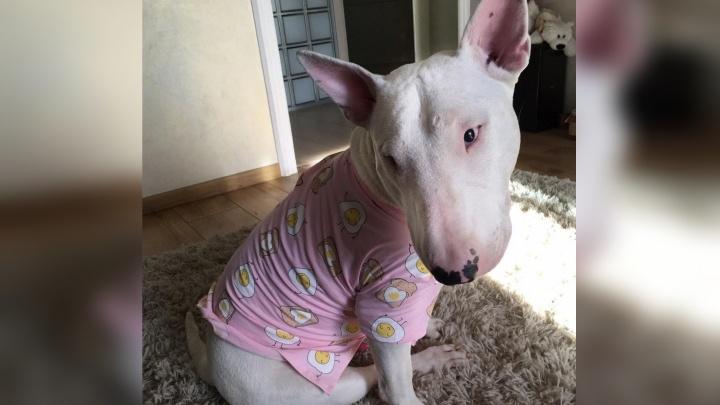Умер пёс Тор, три недели выживавший с хозяином с глухой тайге