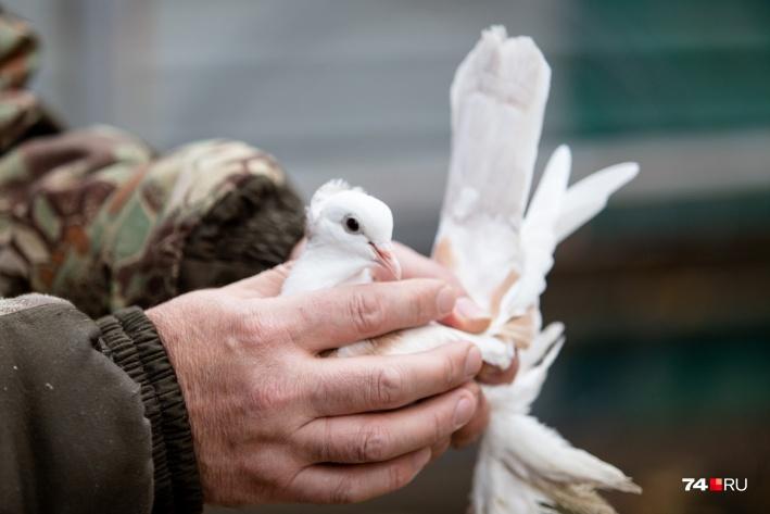 Птица в руках сапожника