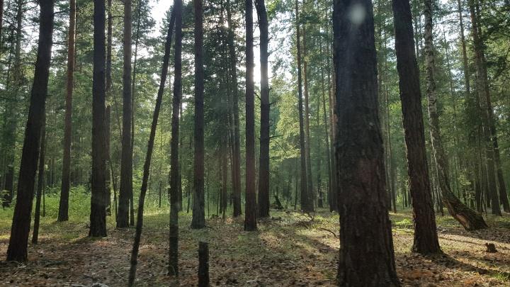 С глаз долой: житель Половинского района отвез обидчика в лес и привязал к дереву