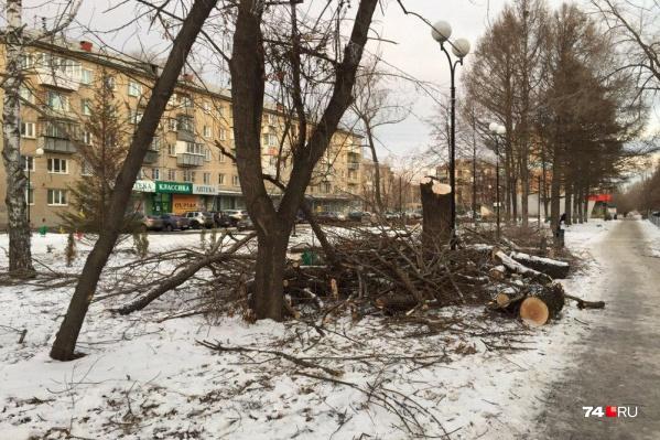Жители Ленинского района заметили пеньки в сквере Первостроителей в минувшие выходные
