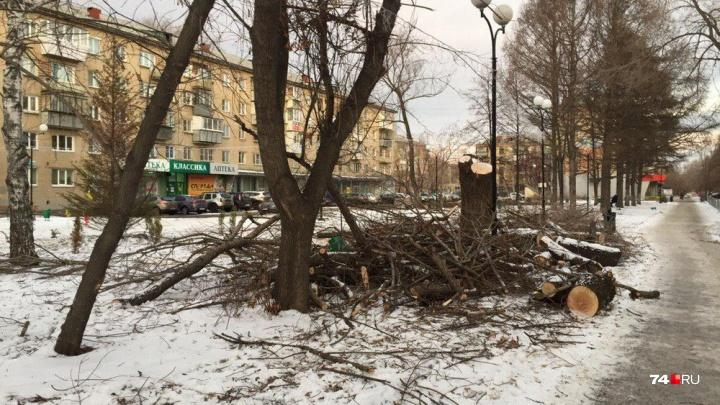 «Ненависть ко всему зелёному»: вырубка деревьев в новом сквере возмутила челябинцев