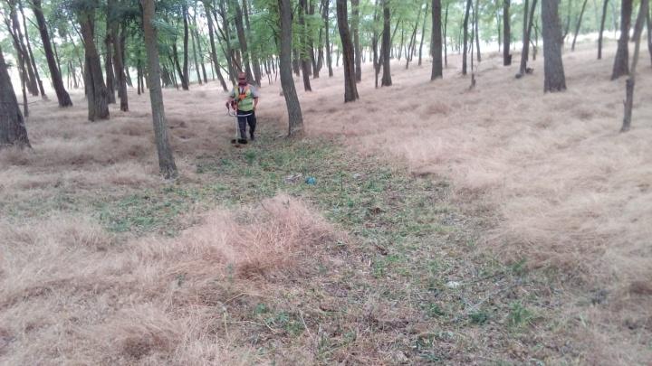 Казаки выкосили поле конопли в Волгодонске