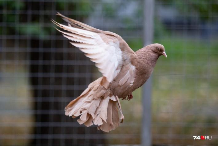 Птицы — это не про бизнес, а про любовь