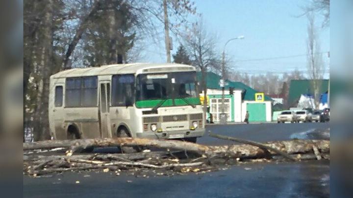 Дорога заблокирована: в Уфе упавшее дерево перекрыло проезжую часть