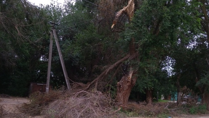 Сильные ливни «похоронили» улицу в Волгограде под сухими деревьями