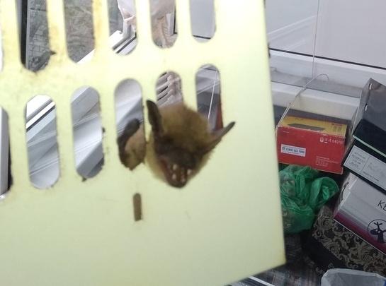 К волгоградцам через вытяжку забралась летучая мышь