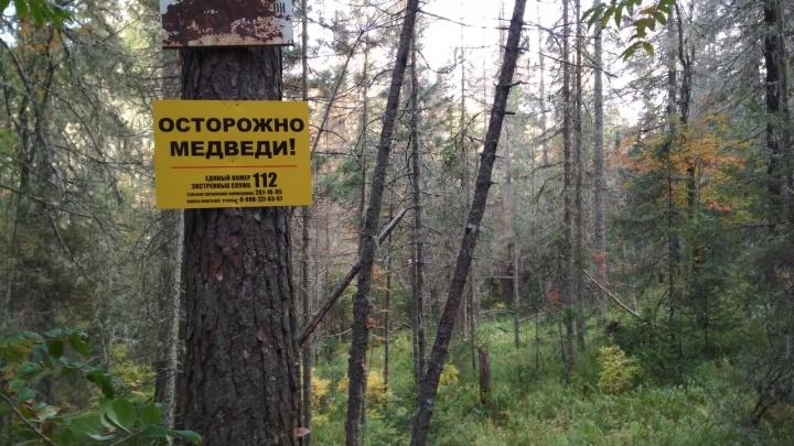 Сезонность на «Столбах»: таблички «Осторожно, клещи» заменили на «Осторожно, медведи»