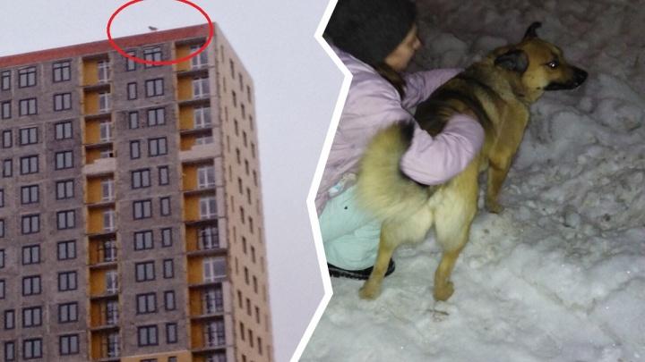 Тюменские волонтеры вместе со строителями сняли с крыши 24-этажки собаку