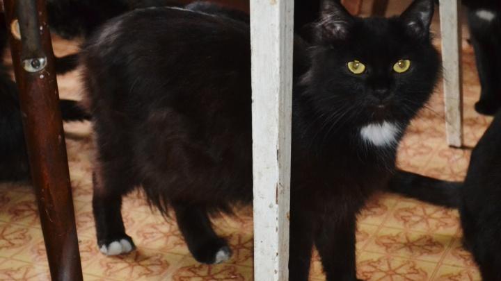 После смерти пожилой хозяйки без дома осталось 15 кошек. Им ищут дом или передержку