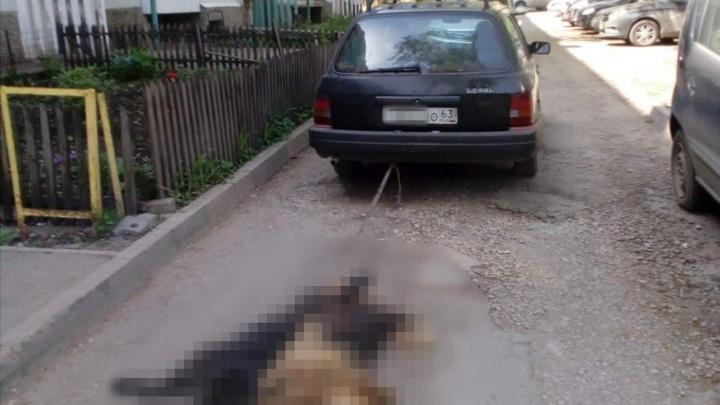 Привязал собак к машине: в Самаре разразился скандал из-за смерти двух псов