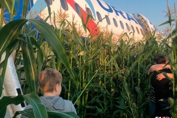 Один из первых кадров после посадки в кукурузном поле