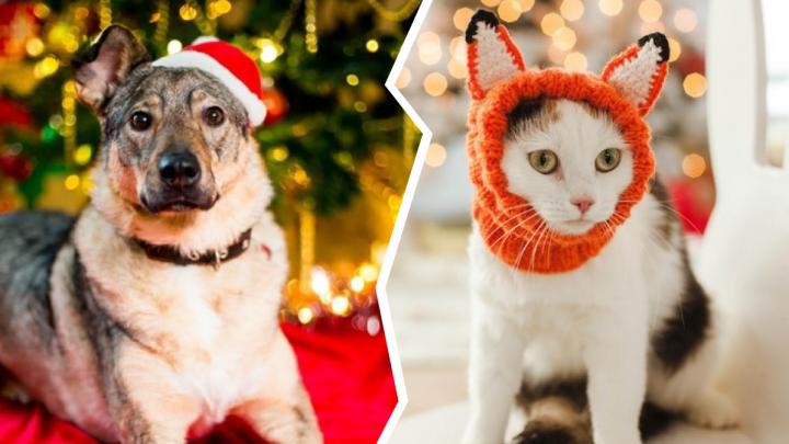 Самый трогательный конкурс: голосуйте за новогодних котиков и собак, которые ищут дом