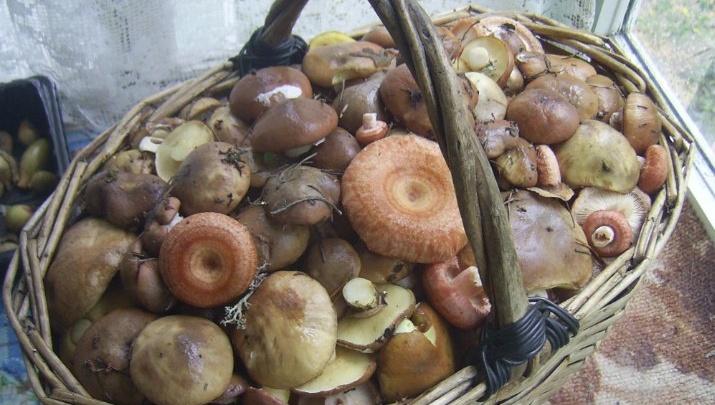 50 лет по лесам: бывалый читатель 29.RU из Архангельской области учит, как правильно собирать грибы