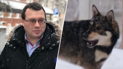 «Сейчас штат — 12 отловщиков». Как начальник службы отлова собирается спасать город от собак