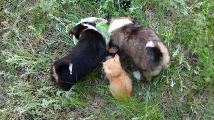Щенки спасли выброшенных на верную смерть котят и сами обрели дом в Волгограде
