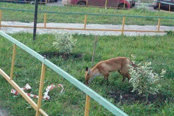 Нашествие диких животных пугает жителей Демского района