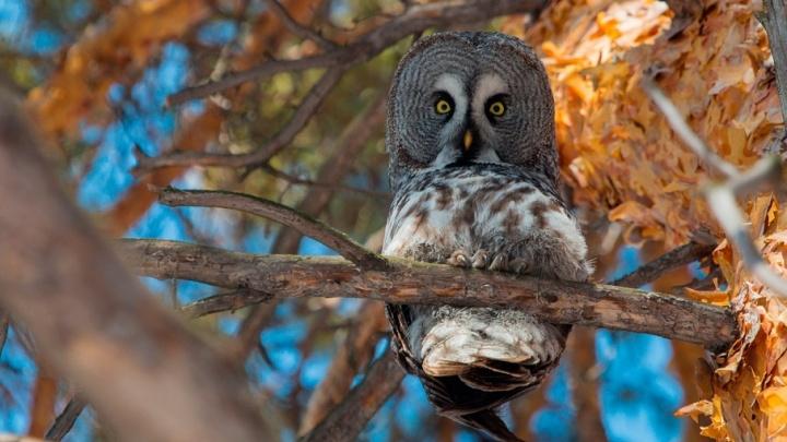Щурка, зяблик и оляпка: 10 красивых птиц, которых можно увидеть в Челябинской области