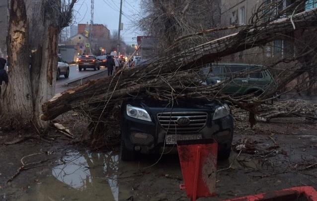 «Ремонт обойдется в копеечку»: в Волгограде разбуянившийся ветер опрокинул на иномарку сухое дерево