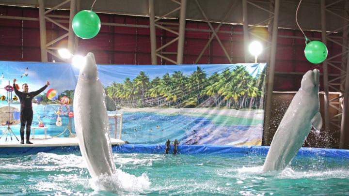 Уфимцы просят построить вместо дельфинария в Уфе«парк развлечений уровня Диснейленда»