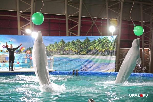 Уфимка считает дельфинарий негуманным развлечением
