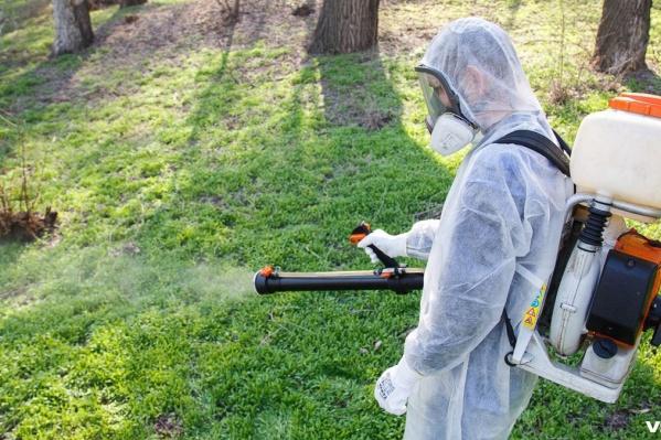 Защитить горожан от крошечной угрозы пытаются с помощью химии