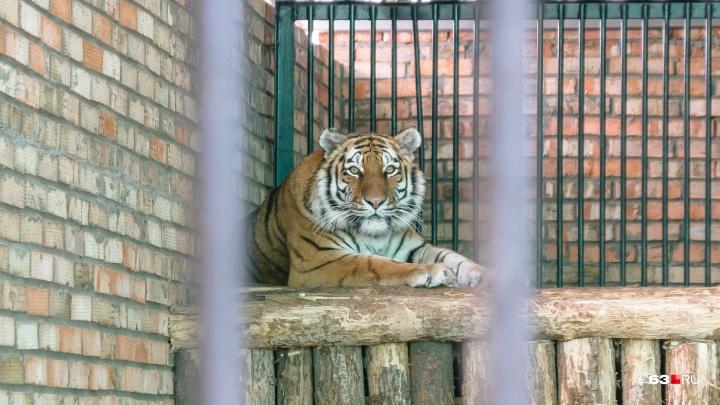 Зоопарк хотят перенести к стадиону «Самара Арена»