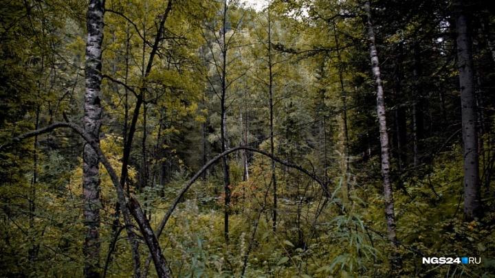 Пожилой грибник потерялся в лесу и двое суток просидел в охотничьей избушке
