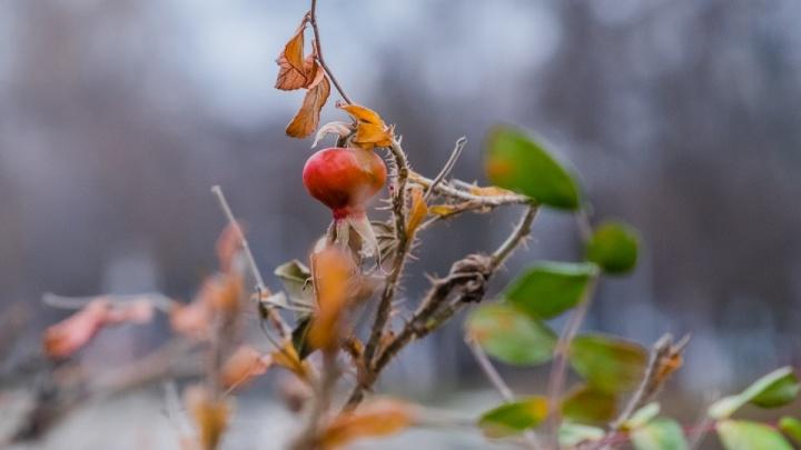 В Прикамье в выходные ожидается дождь со снегом