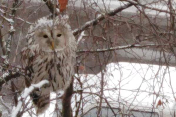 Обнаружившие сову жители города шутят, что она принесла им письмо из Хогвартса<br>