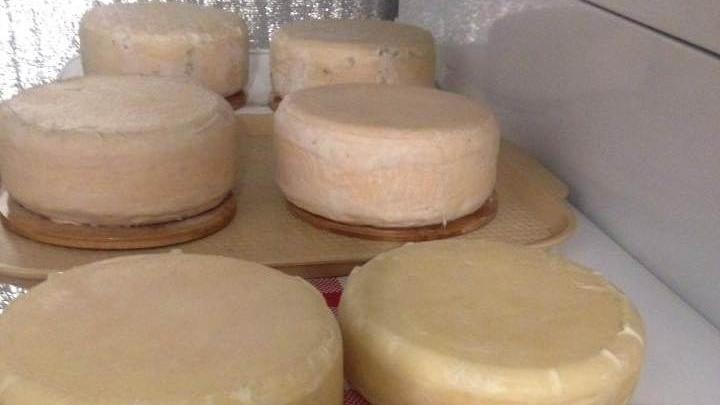 Недовольный качеством сыра в магазинах общественник сам делает моцареллу и чеддер