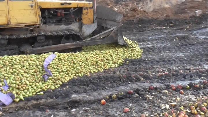 «Нам тоже жаль»: на Южном Урале девять дней хоронили рекордную партию санкционных фруктов