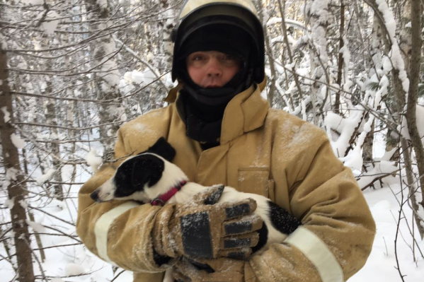 Собака по кличке Чуня испугалась и сбежала в лес после ДТП