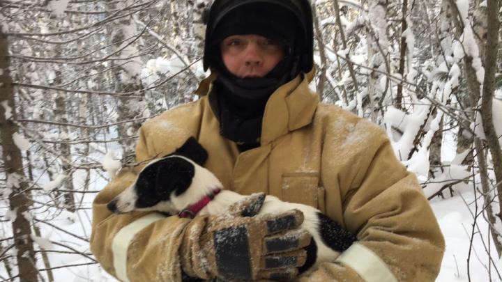 Шли по следам. Тюменские спасатели отыскали в лесу пса, попавшего в ДТП вместе с хозяевами