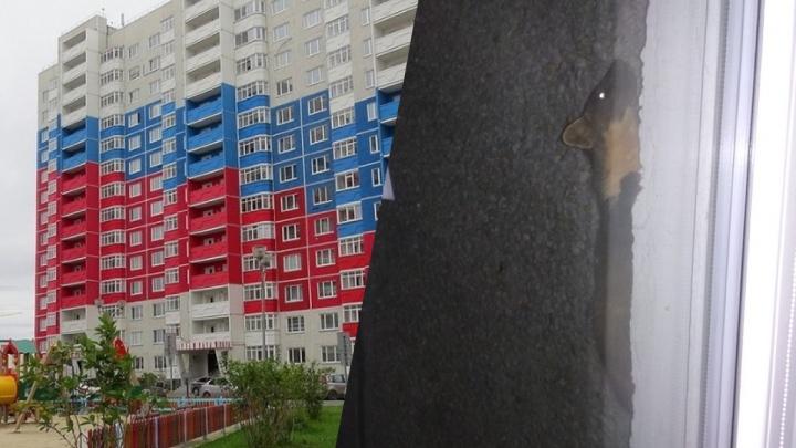 «Забралась на 13-й этаж по фасаду и подглядывала за жильцами»: любопытная куница удивила тюменцев