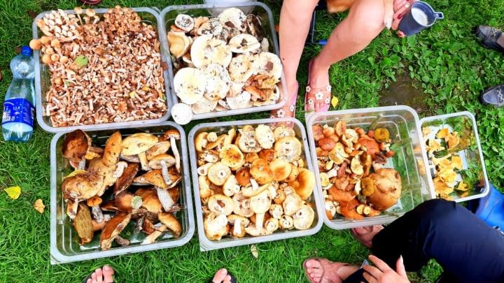«Опята повылезали, хотя ждали в сентябре»: екатеринбуржцы принесли домой большой урожай грибов